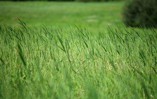 Turf Grass Informazioni