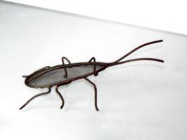 Come uccidere scarafaggi in modo sicuro e efficace