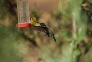 Come fare Hummingbird Feeder Sciroppo