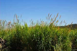 Il processo di erba che cresce
