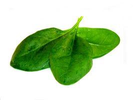 Diserbanti per gli spinaci