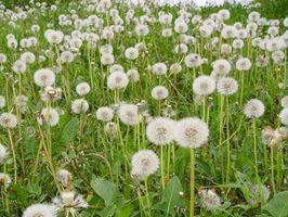 Il momento migliore per piantare erba Seed in Indiana