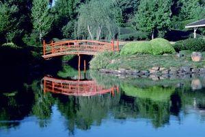 Piante e Giardini giapponesi
