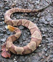 Come sbarazzarsi di Snake infestazioni