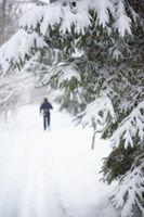 Evergreen alberi nella neve