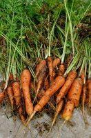 Crescere un orto senza aratura