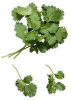 Come tagliare il Cilantro Herb