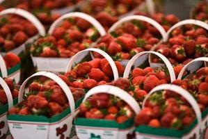 Come coltivare fragole in finestra Scatole