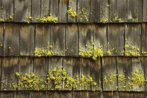 Trattamenti solfato di rame per tetti