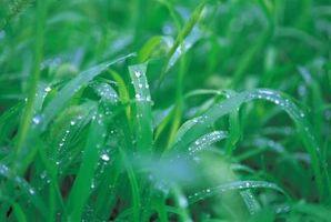 Dovrei tagliare l'erba sotto la pioggia?