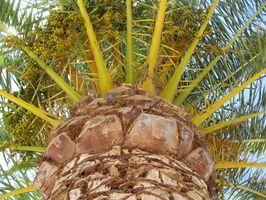 Bugs comuni Palm