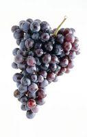 Tipi di viola uva senza semi
