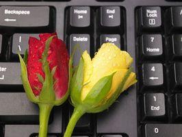 Gambo lungo varietà di rose