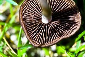 Libri su fungo coltivazione