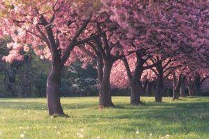 Effetti del cloro sugli alberi da frutta