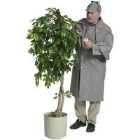 I segni che un Ficus impianto coperta è troppo secca