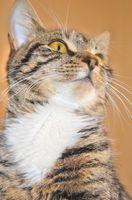 Come sbarazzarsi di gatto odore di urina sulle mattonelle