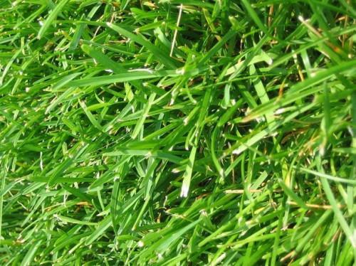 Che tipo di erba seme è migliore per Clay suolo?