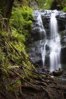 Che cosa è Balsam-albero Moss?