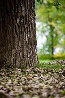 Qual è il processo con cui gli alberi perdono le foglie in autunno?