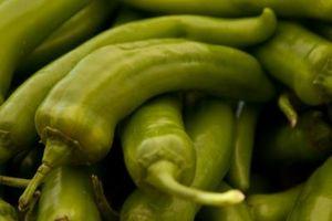 Saranno uccelli mangiano pepe piante?
