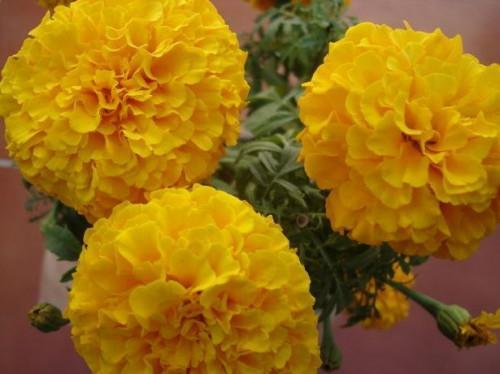 Quali fiori fanno bene in Sun completa?