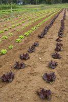 Shelf Life di semi di ortaggi
