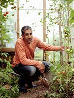 Quali sono macchie marroni su foglie di pomodoro?