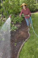 Significa dare un piante diverse quantità di acqua influenzare la crescita?