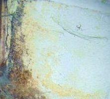 Pulizia Mold on muri di fondazione in un seminterrato