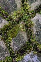 Come pulire Moss Da un patio in mattoni con candeggina
