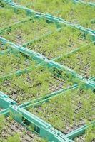 Quando si pianta verde Cipolle in Pennsylvania?