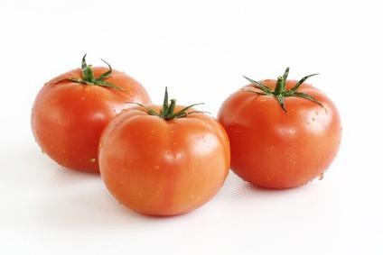 Di temperatura per la coltivazione di pomodori con la coltura idroponica