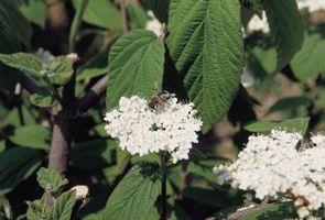 Bee repellente naturale per Ambientazione esterna