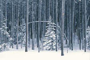 Supporto per Pendente alberi