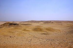 Piante in deserto egiziano