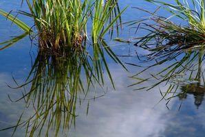 Le piante acquatiche in via di estinzione