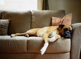 Rampe per aiutare i cani salire sul divano
