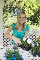 Quali sono modi per piantare nuovi piante senza piantare semi?