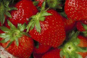 Quali frutti possono essere coltivate con la coltura idroponica?