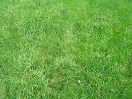 Come dovrebbe andare a piantare semi di erba?
