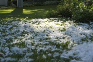 Crescere Erba dove nevica