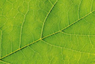 Che cosa significa quando pianta foglie diventano marroni o giallo?