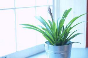 Vs. acqua grigio L'acqua del rubinetto per le piante