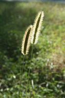 Trattamenti Prato per le erbacce a marzo