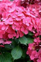 Come sono fiorite piante adattate per sopravvivere?