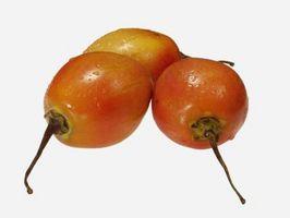 Come si coltiva una pianta di pomodori albero?
