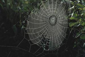Modi naturali per sbarazzarsi di ragni All'interno della casa