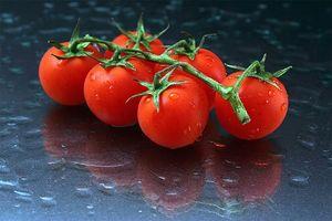 Quali sono le cause Foglie gialle su piante di pomodoro?