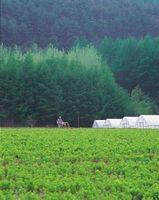 È Trifluralin 4EC erbicida pericoloso per le piante exsisting Garden?